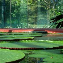Amazon Waterlily Pavilion, Adelaide Botanic Garden